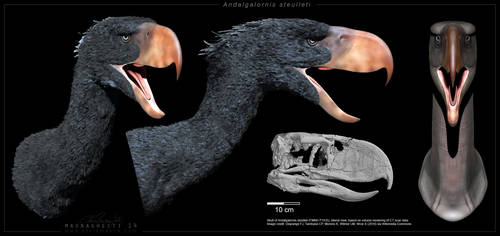 Andalgalornis 3D model by ChrisMasna