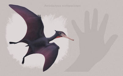 Aerodactylus scolopaciceps by ChrisMasna