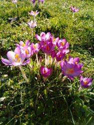 Flowers (17.02.2019) by Indarkeria