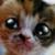 kitty plz