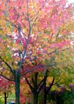 Trio of Trees by Momofbjl