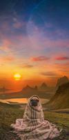 Pug Babushka