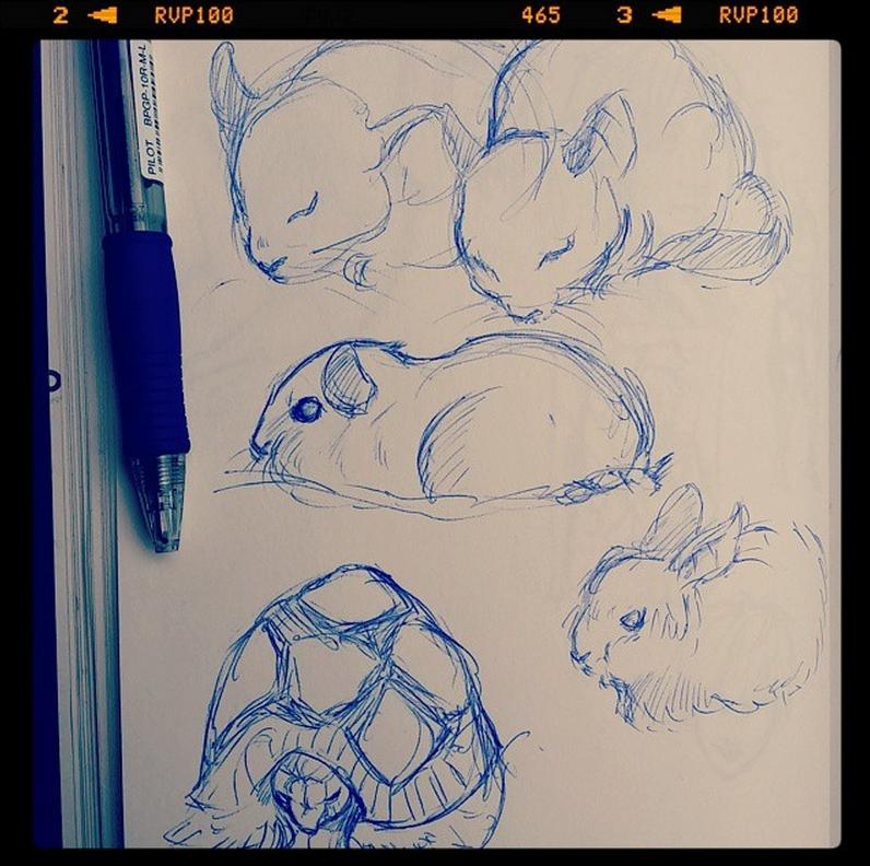 Pet shop study by Ioana-Muresan on DeviantArt