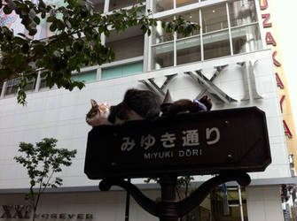 Cats on a street sign in Ginza