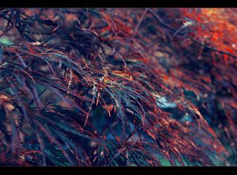 Autumn rainbow by Ashayaa