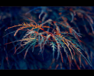 Hand of nature by Ashayaa