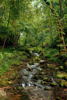 Dschungel Schweiz