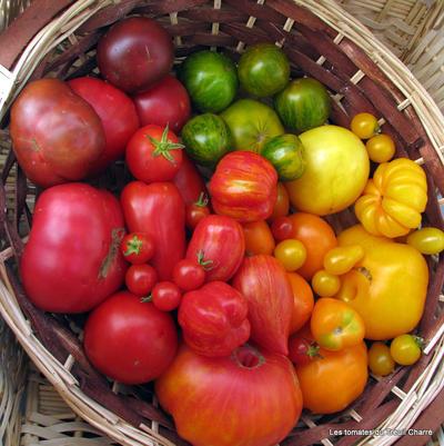 Toutes les couleurs sont dans la tomate by uranie