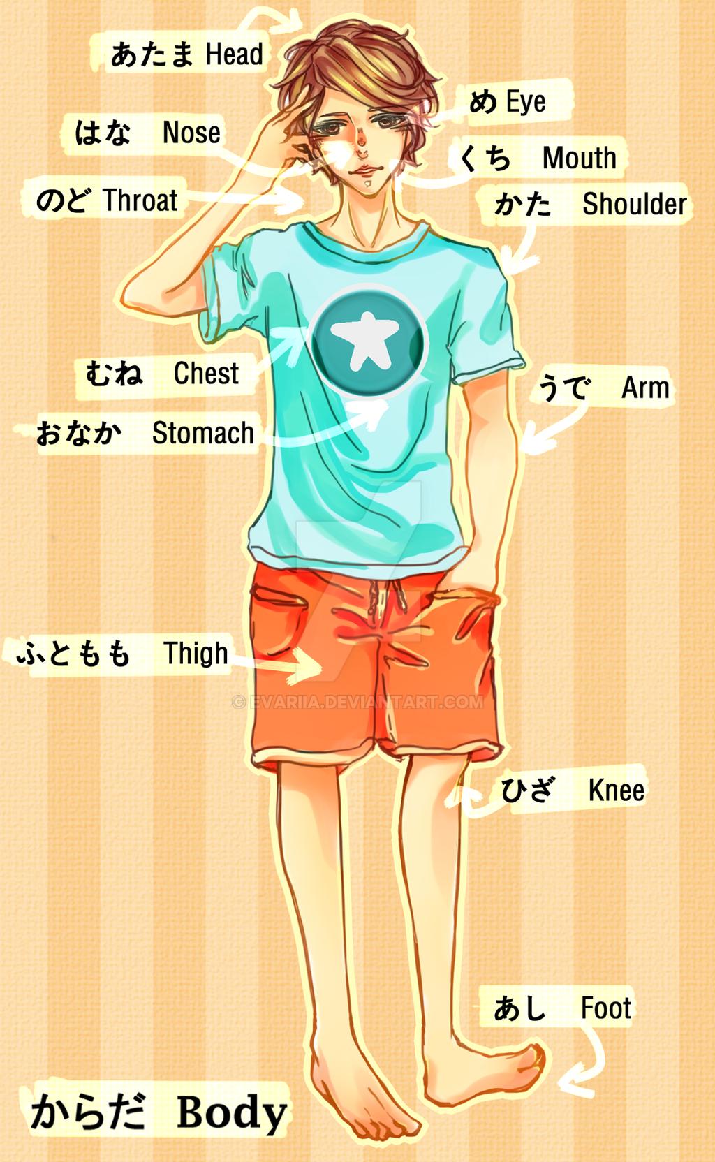 Japanese Body Diagram Easy Wiring Diagrams Japan French