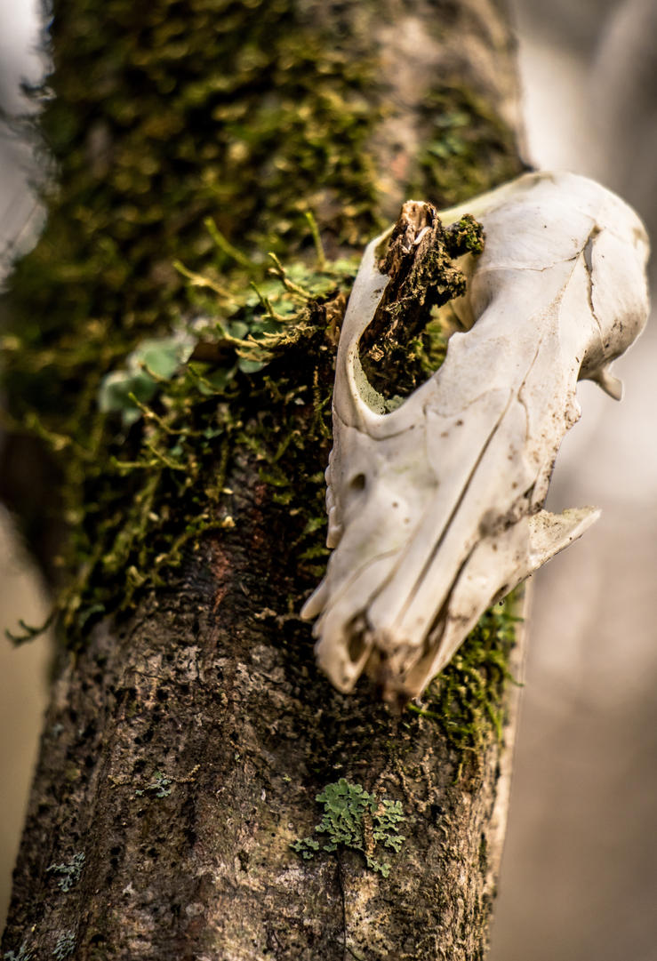 Skull on Tree by HighestVelocity