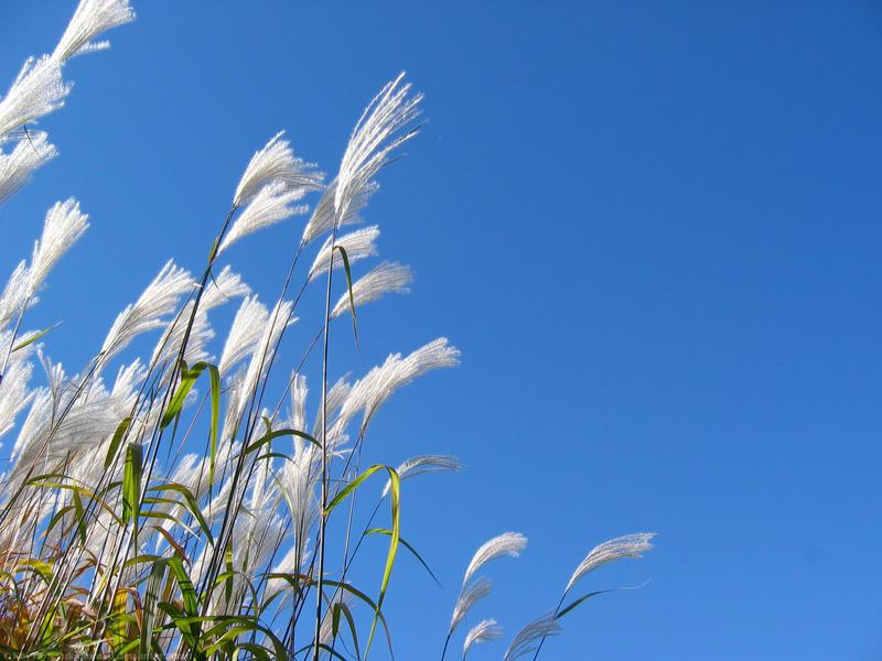 blue wind by yukidaifuku