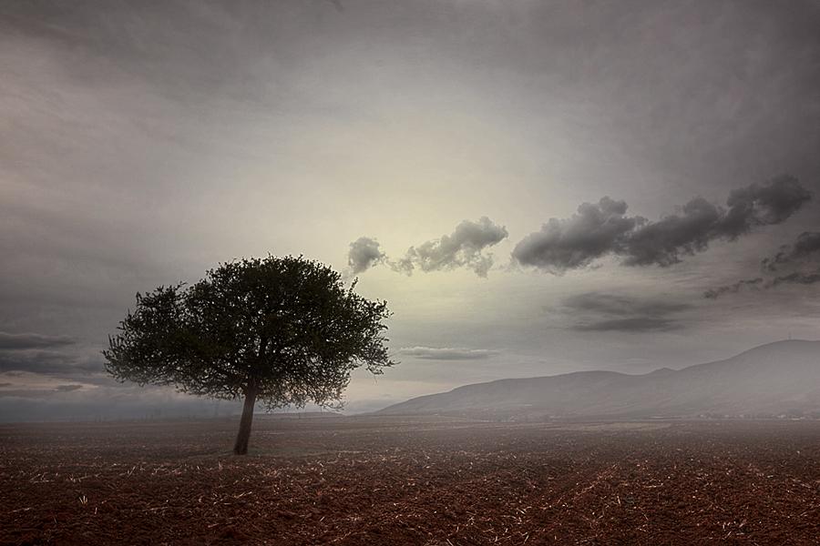 tree .. by apostolos-t