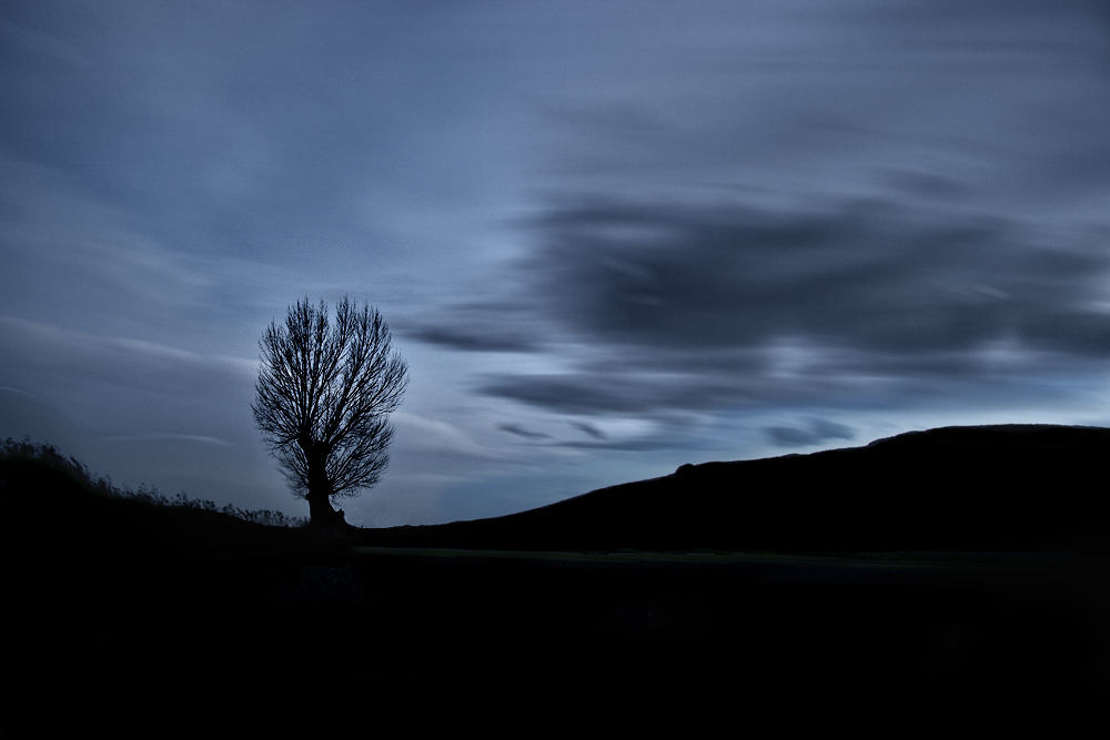 tree by apostolos-t