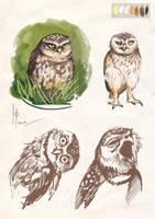 owls sketches 2 by Ptich-ya