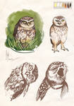 owls sketches 2