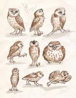 owls sketches 3 by Ptich-ya