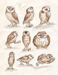 owls sketches 3