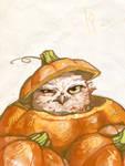Owl in a pumpkin