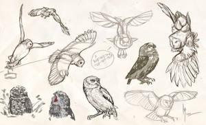 owls sketches 4 by Ptich-ya