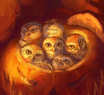 Owls in pumpkin