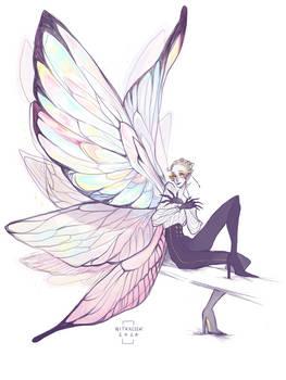 Motylek3