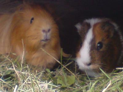 Yuffie and Susi by nova1992