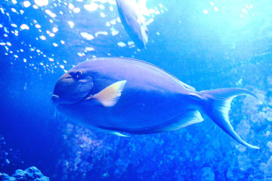 Maui fish by omarhash189 on deviantart for Maui fishing store