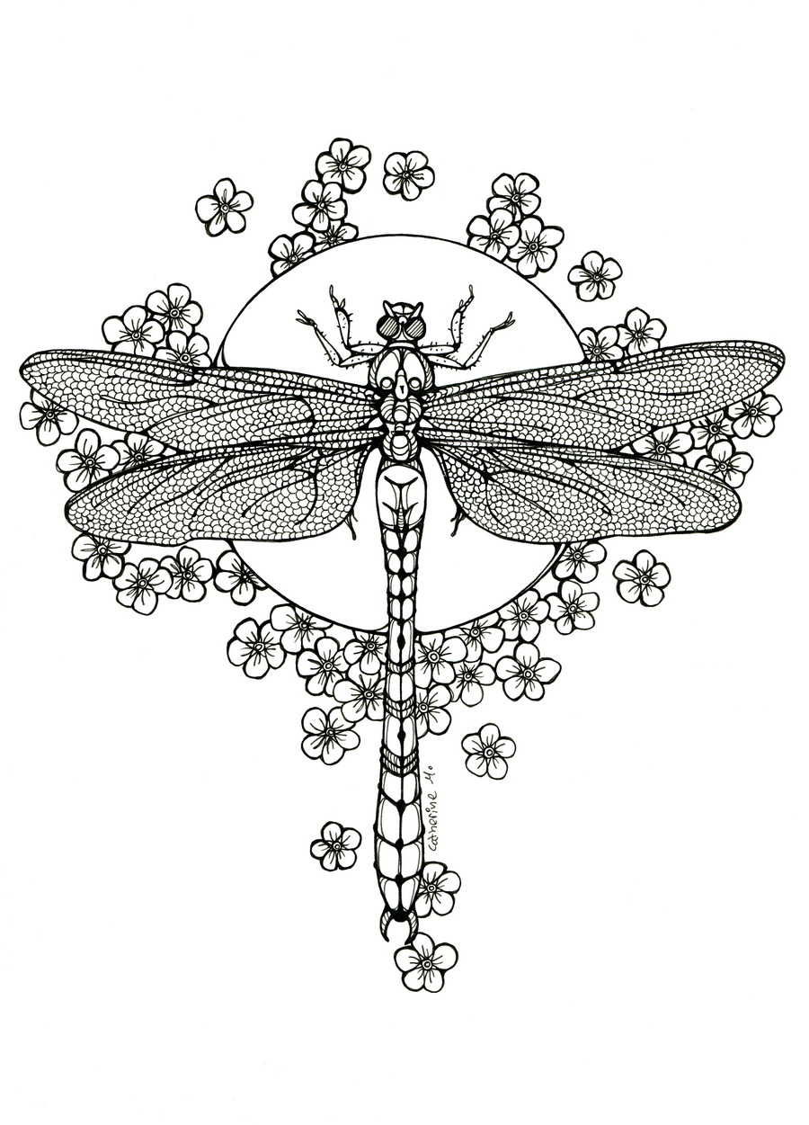 Dragonfly lineart by cathm on deviantart for Dragonfly coloring pages
