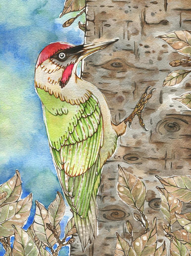 European green woodpecker by CathM