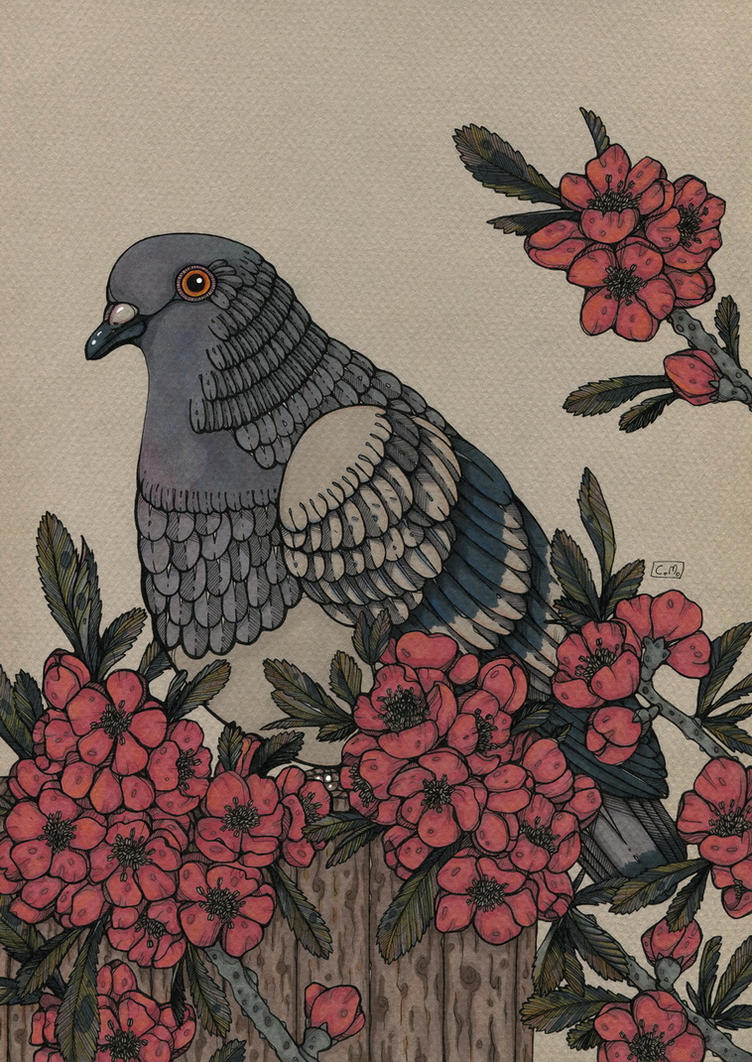 Pidgeon by CathM