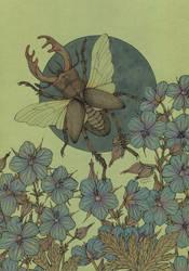 Lucanus cervus by CathM