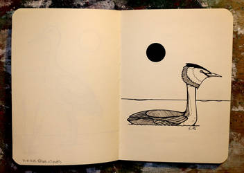 Inktober 25 - Great crested grebe by CathM