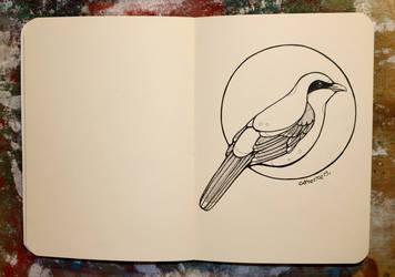 Inktober 27 - Great grey shrike by CathM