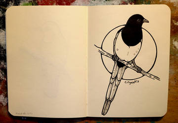 Inktober 31 - Eurasian magpie by CathM