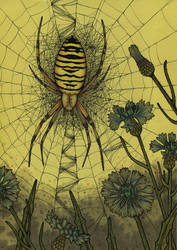 Wasp spider by CathM