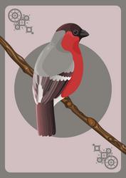 Bullfinch card by CathM