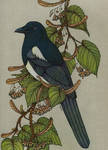 Magpie by CathM