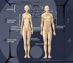 Human Anatomy Study