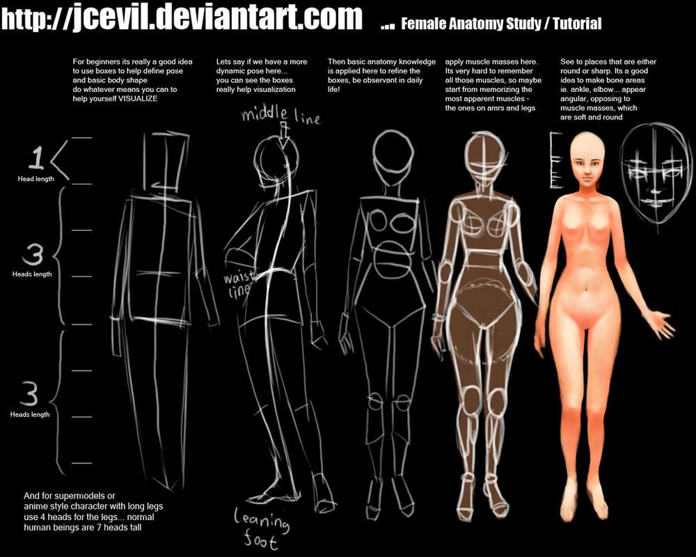 Female Anatomy Study V2 by jcevil on DeviantArt