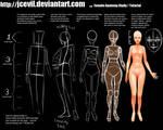 Female Anatomy Study V2 by jcevil