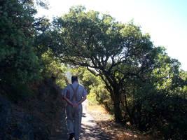 my dad walking through trees