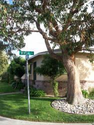 tree outside my house