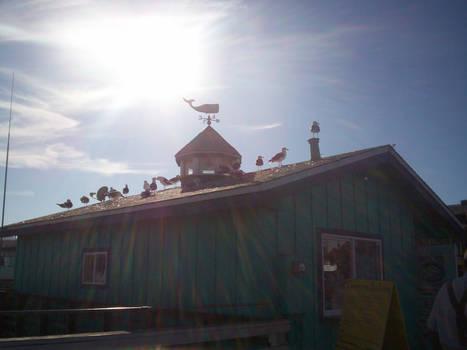 seagulls basking in the sun