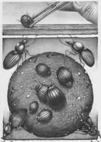 Beetlemania by Bernardumaine