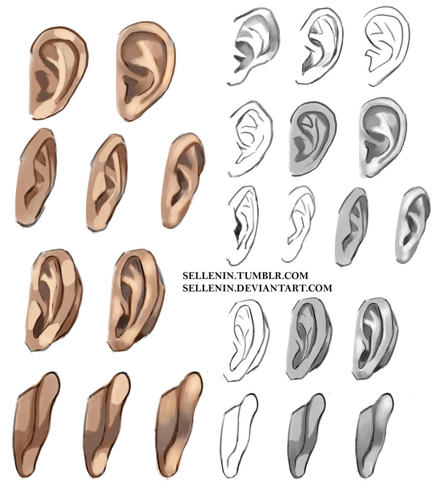 Ear Drawing Reference Ecosia