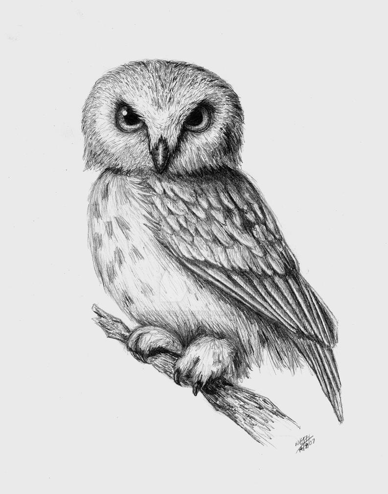 owl by mrsbobetski