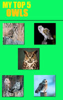 5 Types of Owls