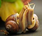 Mollusks, snails