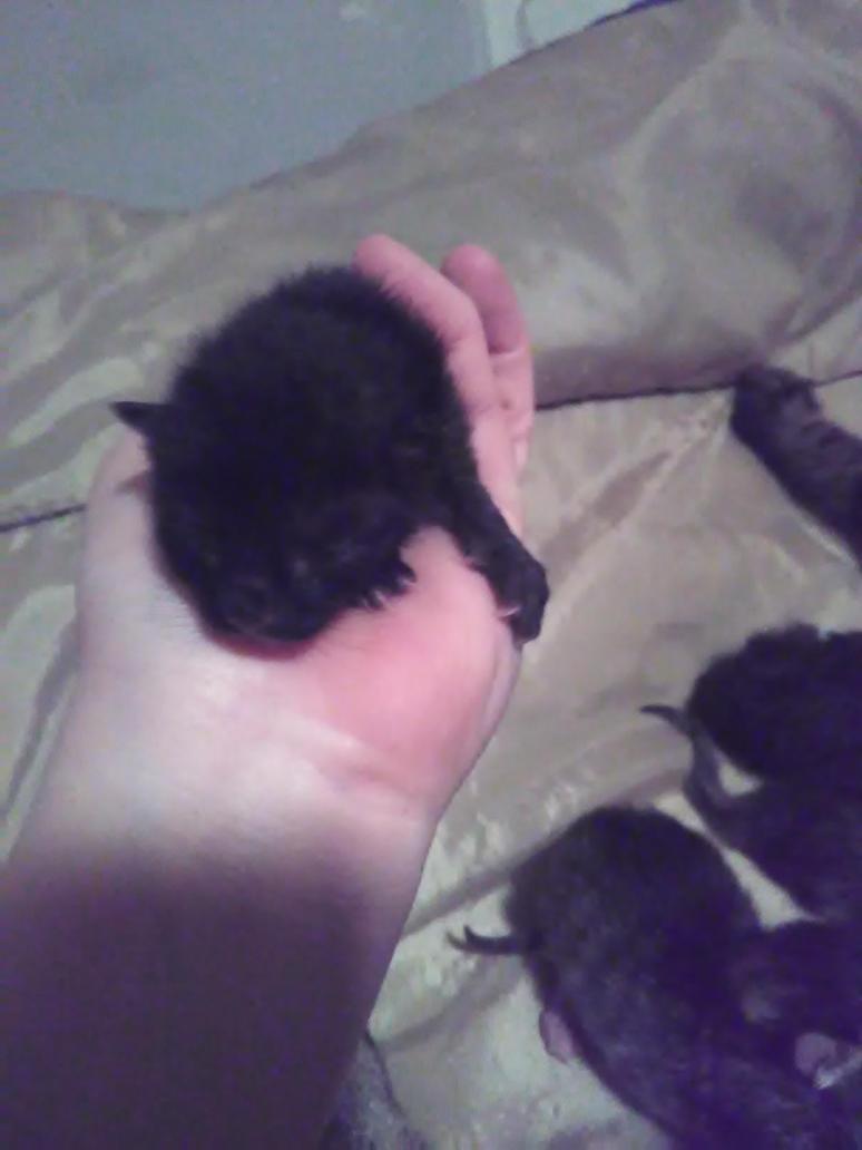 kitten 4 by yellowdragonflower