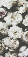 White Roses CBB